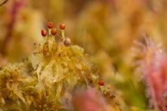 A beautiful closeup of a marsh moss. Macro photo of a swamp foliage. Royalty Free Stock Photography