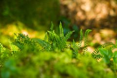 A beautiful closeup of a mountain vegetation in Tatra mountains in Slovakia, Europe. Summer plants in Tatry national park. Natural scenery royalty free stock image