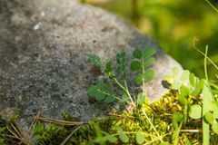 A beautiful closeup of a mountain vegetation in Tatra mountains in Slovakia, Europe. Summer plants in Tatry national park. Natural scenery stock photos