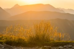 A beautiful closeup of a mountain vegetation in Tatra mountains in Slovakia, Europe. Summer plants in Tatry national park. Natural scenery stock image