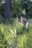 Meadow Plants in a Closeup Photo on a Sunny Day. Beautiful closeup photo of plants on a meadow. There is lovely natural sunlight and bright colorful meadow in royalty free stock photos
