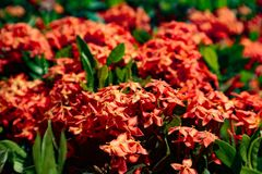 Beautiful closeup purple yellow red and orange color flowers in the green parks outdoor stock photography
