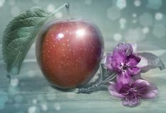Beautiful closeup ripe red apple and crimson flowers of an apple tree on a wooden soft tinted background with a nice blurred bokeh.  Royalty Free Stock Image