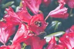 Beautiful closeup shot of red flowers in the garden royalty free stock images