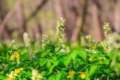 Beautiful closeup spring flowers Stock Photo