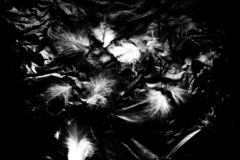 Beautiful closeup textures abstract the falling feathers black and white color isolated wall background and pattern