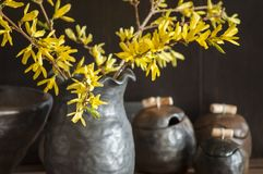 Beautiful closeup of unique handmade pot with wooden detail and branches of Forsythia in black vase Royalty Free Stock Photo