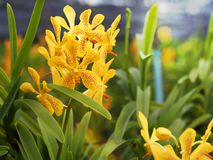 Beautiful closeup of yellow orchid. stock photo