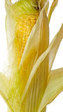 Beautiful clothes ear of corn Royalty Free Stock Photos