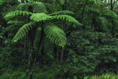 Beautiful Cloud Forest Royalty Free Stock Images