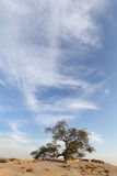 Beautiful cloud and the tree of life, Bahrain Stock Image