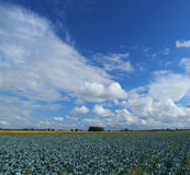 Beautiful clouds and blue sky stock image