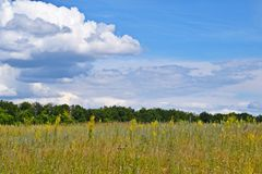 Beautiful clouds and blue sky against green meadows. Picturesque summer landscape stock image