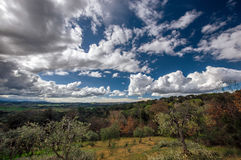 Beautiful clouds over colorful forest Stock Photos