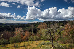 Beautiful clouds over colorful forest Royalty Free Stock Image