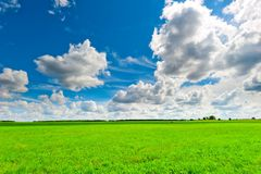 Beautiful clouds over the green field Stock Photography