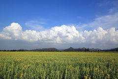 Beautiful clouds over the sunflower field Stock Photography
