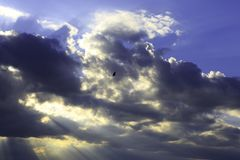 Sunlight over the sea and a bird. Beautiful clouds with the sunlight over the sea and a bird Stock Image