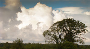 Beautiful clouds. Tree on a background of beautiful clouds Stock Images