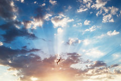 Beautiful cloudscape and flying bird stock image