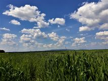 Endless corn field on a summer day stock photo