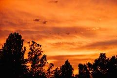 Bright orange sunset stock images