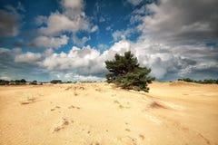 Beautiful cloudy sky ove sand dunes Stock Images
