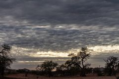 Beautiful cloudy sky over the almost dry trees. Of the arid zone stock photos