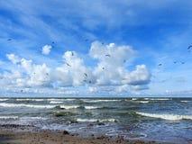 Baltic sea coast and beautiful cloudy sky, Lithuania Royalty Free Stock Image