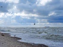 Baltic sea coast and beautiful cloudy sky, Lithuania Royalty Free Stock Photos