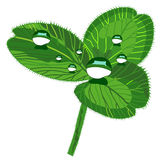 Beautiful clover with drops Stock Photography