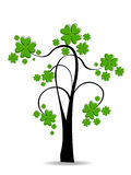 A beautiful clover tree on white background. Stock Photography