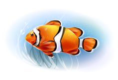 Beautiful clownfish in the sea. Royalty Free Stock Photos