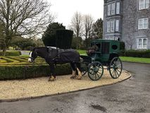 Beautiful Clydesdale Horse with Buggy. On grounds of Dromoland Castle stock photo