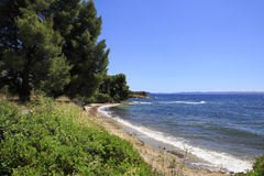 Beautiful coast of the Aegean Sea with pine trees. Stock Images