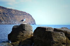 Beautiful coast of the island of Volcano - Sicily Royalty Free Stock Photography