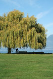 Beautiful coast in vancouver canada Royalty Free Stock Photography