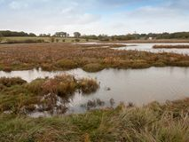 Beautiful coastal swamp scene with water and grass no people Royalty Free Stock Photography