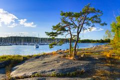 Beautiful coastline of Baltic sea. Sweden Stock Image