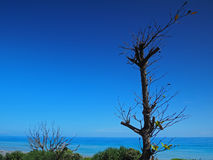 Beautiful coastline and tree in east Taiwan Stock Images