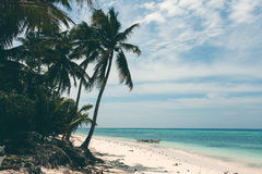 Beautiful coastline, turquoise view of the sea with palm trees, Stock Photos