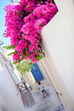Beautiful cobbled streets with bougainvillea on Royalty Free Stock Photos