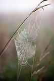 Beautiful cobwebs in autumn Royalty Free Stock Images