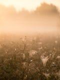Beautiful cobwebs in autumn Royalty Free Stock Photos