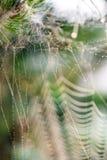 Beautiful cobwebs in autumn Stock Photo