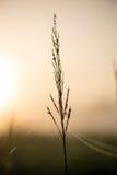 Beautiful cobwebs in autumn Stock Photos