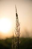 Beautiful cobwebs in autumn Stock Image
