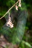 Beautiful cobwebs in autumn Stock Photography