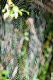 Beautiful cobwebs in autumn Royalty Free Stock Image