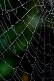 Beautiful cobwebs in autumn Royalty Free Stock Photography